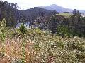LAKE OHAKURI Picture