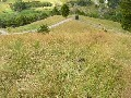 CHOICE 4 HECTARE BLOCK Picture