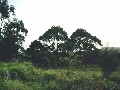 HOKIANGA HARBOUR - OMAPERE Picture