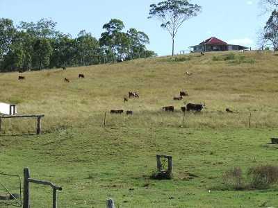 Spelling Block Close To Saleyards & City Picture