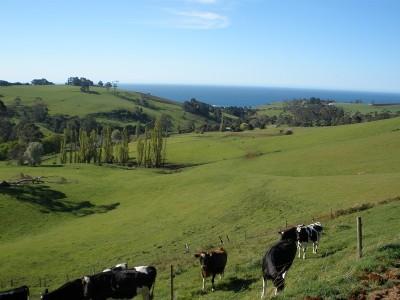 Rural Paradise Picture
