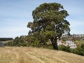 HOUSE AND 11 ACRES OF RESIDENTIAL LAND IN BURNIE Picture