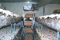 Organic Mushroom Farm Picture