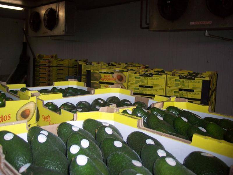 MIGHTY MAREEBA MANGOES AND AVOCADOS, HUGE CROP WILL GO TOO !!!!!!! Picture 1