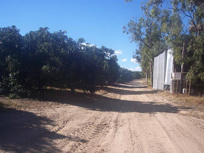 MIGHTY MAREEBA MANGOES AND AVOCADOS, HUGE CROP WILL GO TOO !!!!!!! Picture 3