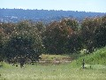45 acres with Power and water available Picture